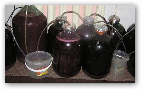 Как сделать домашнее вино из терновника в домашних условиях рецепт